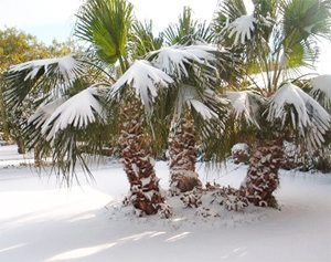 Freezes in Central Florida