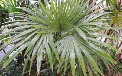 Groveland – Palms & Barbecue